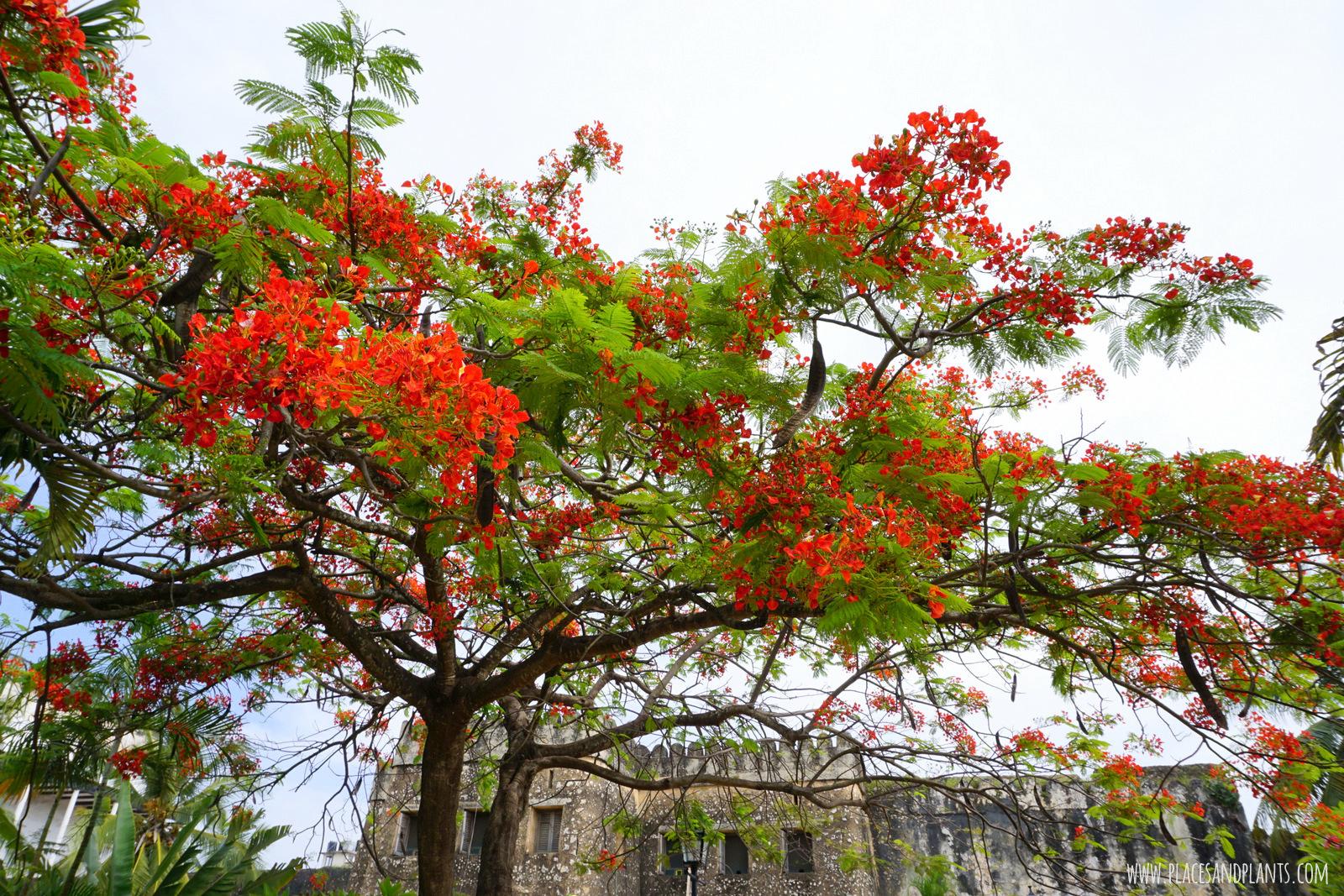 Zanzibar stone Town Ogrody Forodhani Gardens