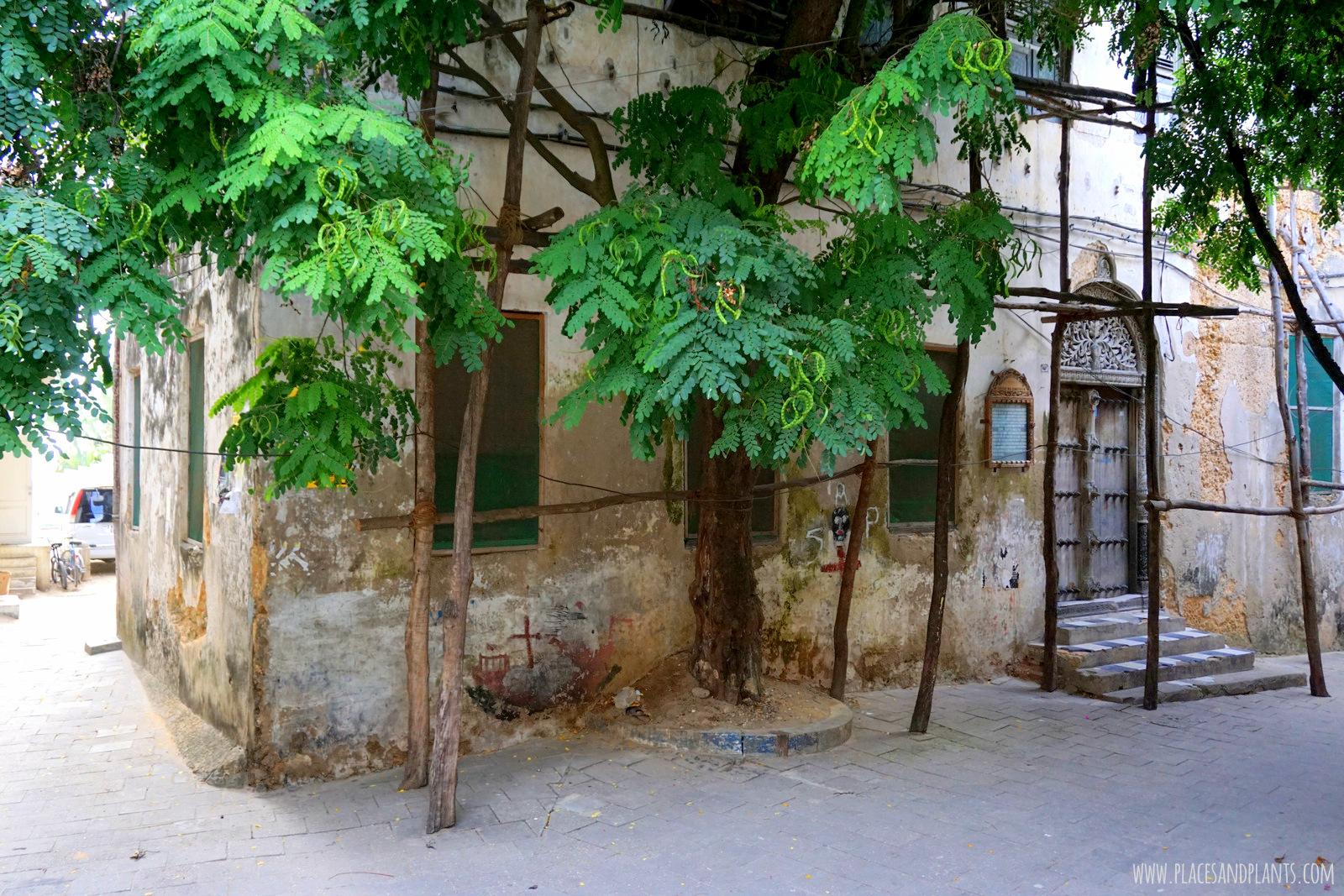 Zanzibar Stone Town Dom Tippu Tipa