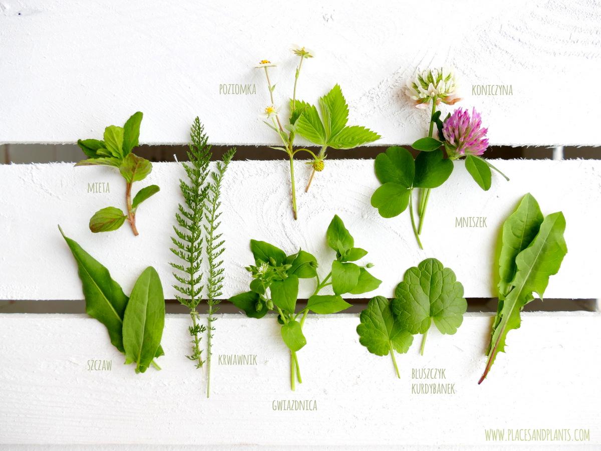 sałatka z dzikich roślin jadalnych